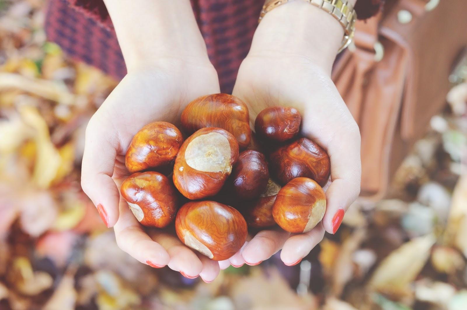 conkers, british autumn, autumn, autumn photos