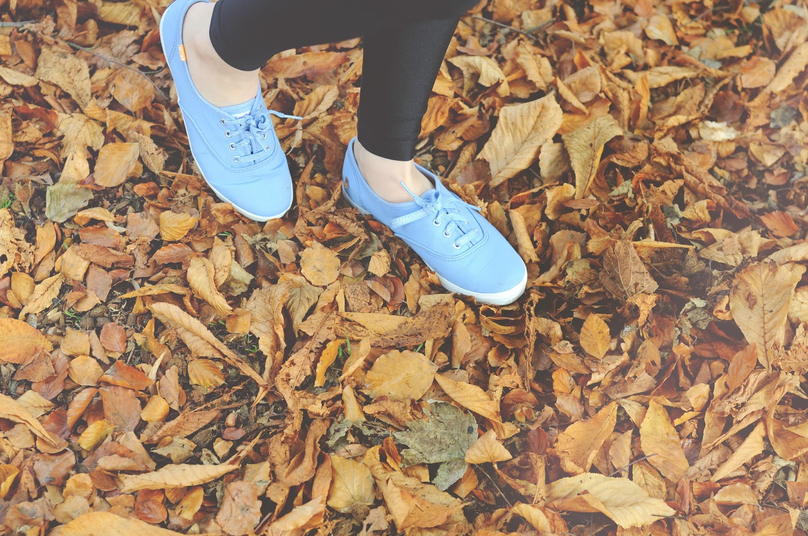 autumn leaves, british autumn